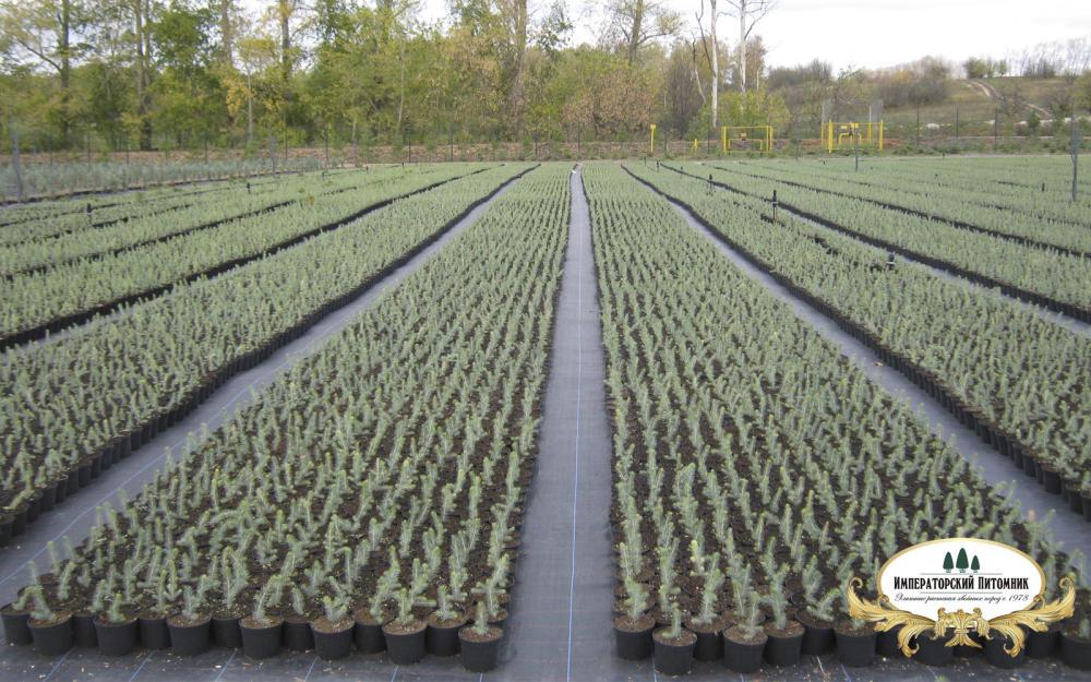 национальных традиций, фото растений в питомнике татарникова все анкеты